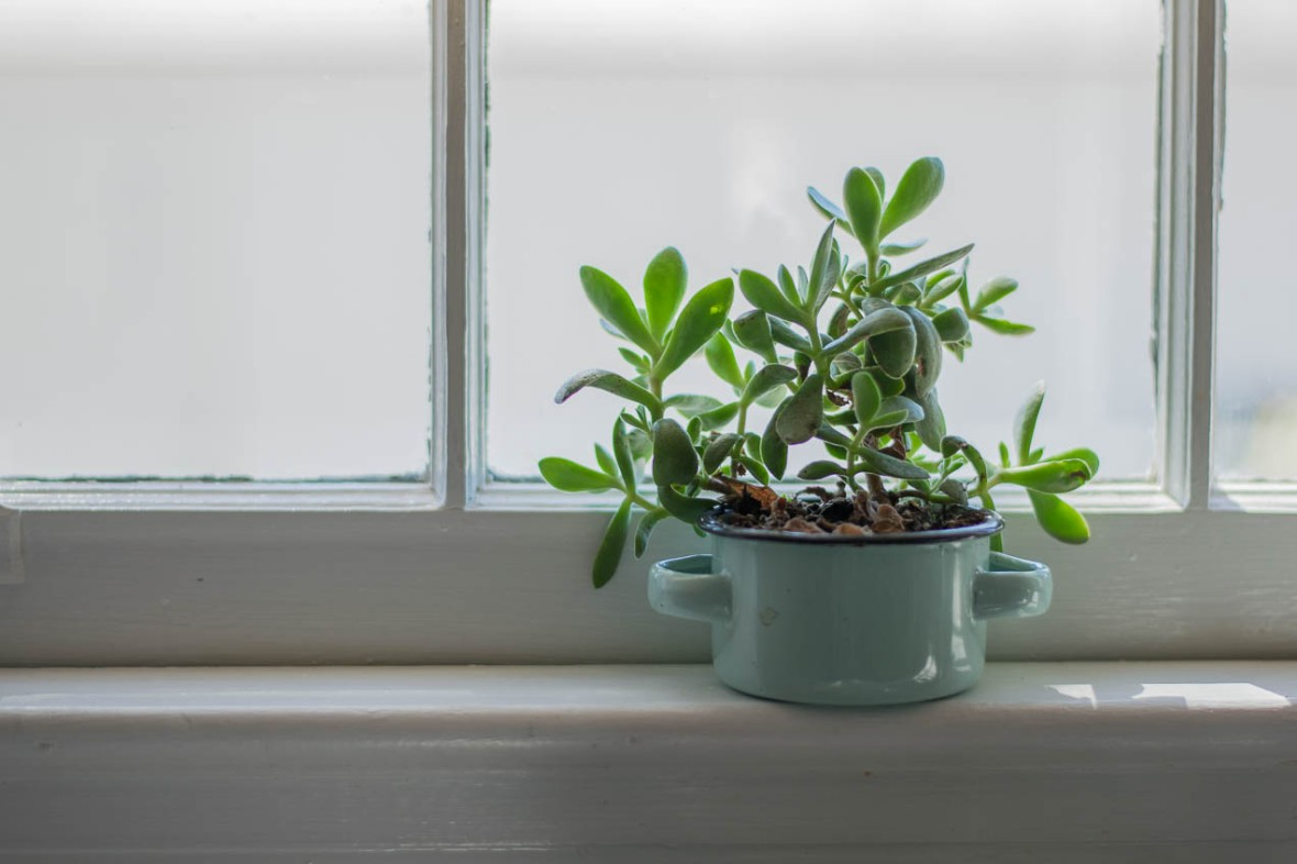 Succulent in small, blue pot on kitchen window sill.