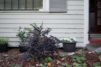 Photos of Cindy's garden.