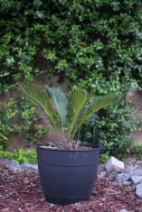 Potted plant vignette.