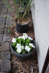Small potted white flowers at Cindy's doorstep.