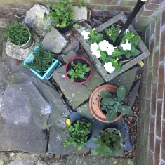 A corner garden on Cindy's patio.