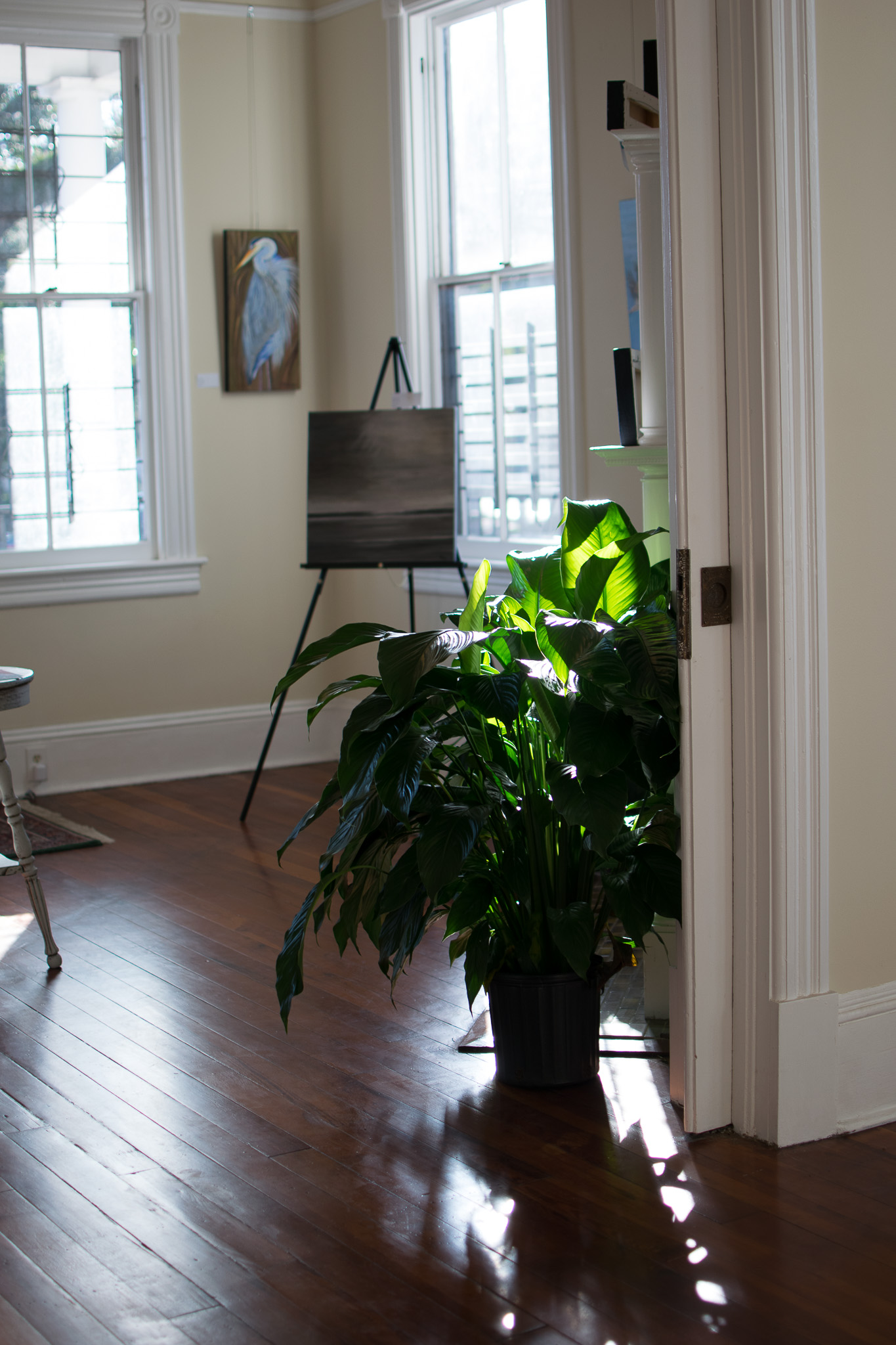 A view of the room where Mrs. Grant's art was on display. Sunlight shines through the windows through the leaves of the potted plants on the floor.